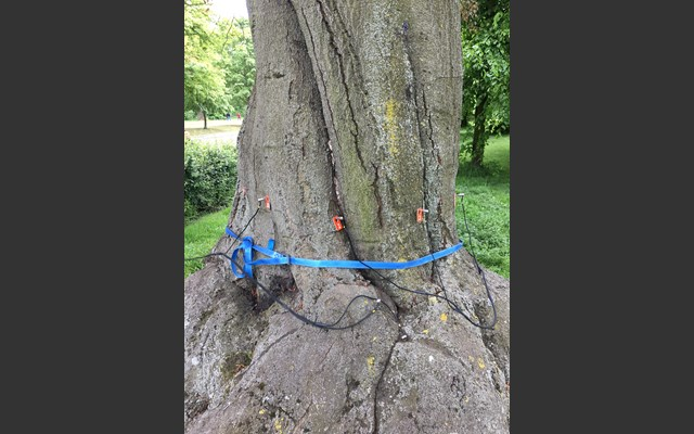 Detailed tree inspections in Hyde Park