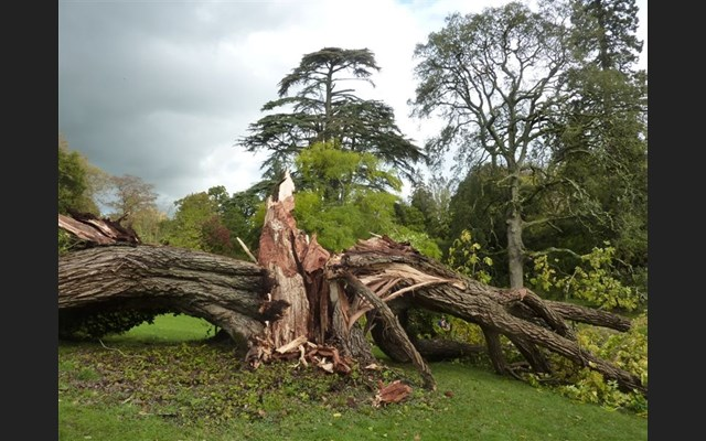tree hit by storm damage