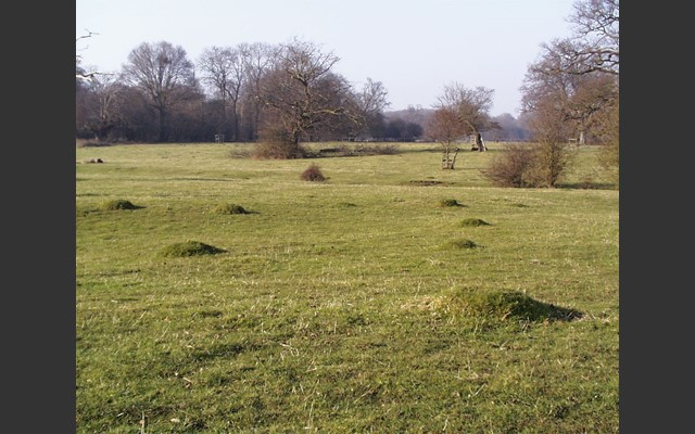 landscape at Hatfield Forest