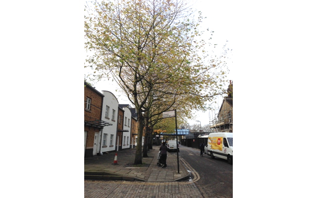 Trees in Hackney, London