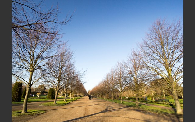 Tree Inspections for the Royal Parks
